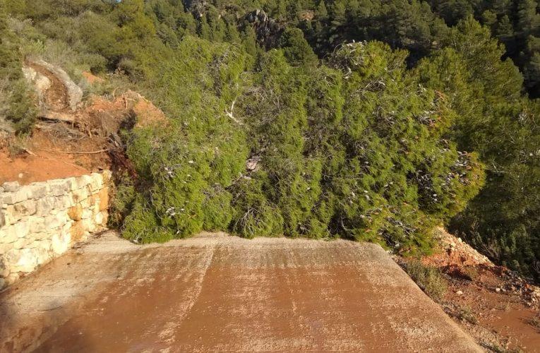 El camí nou de la Foia, bloquejat per arbres i esllavissades