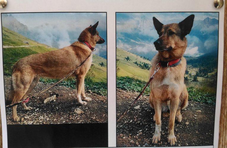 Cerquen una gossa perduda a Margalef el 3 de març